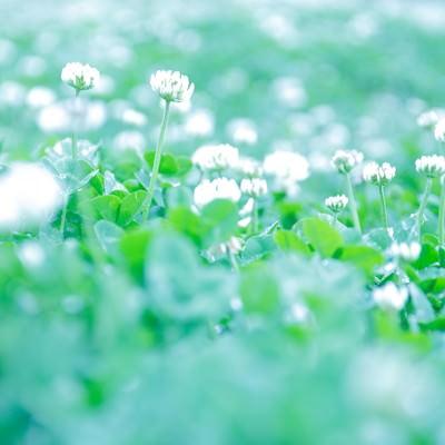 「ふんわりした雰囲気の花」の写真素材