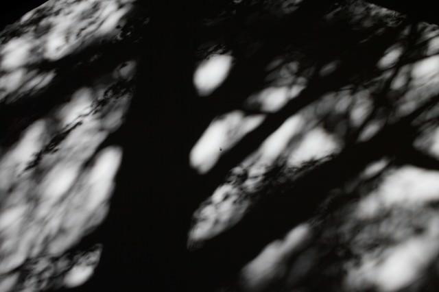 思惑が乱れる影の写真