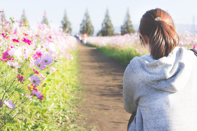 コスモス畑と女性の写真