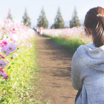 「コスモス畑と女性」の写真素材