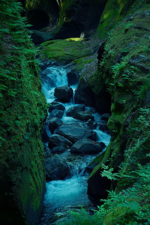 緑の中の沢の写真