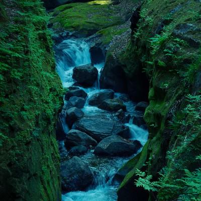 「緑の中の沢」の写真素材