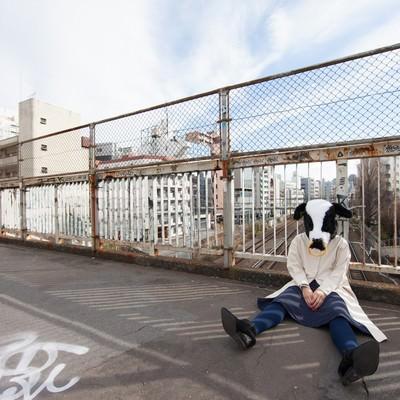路頭に迷う牛さんの写真
