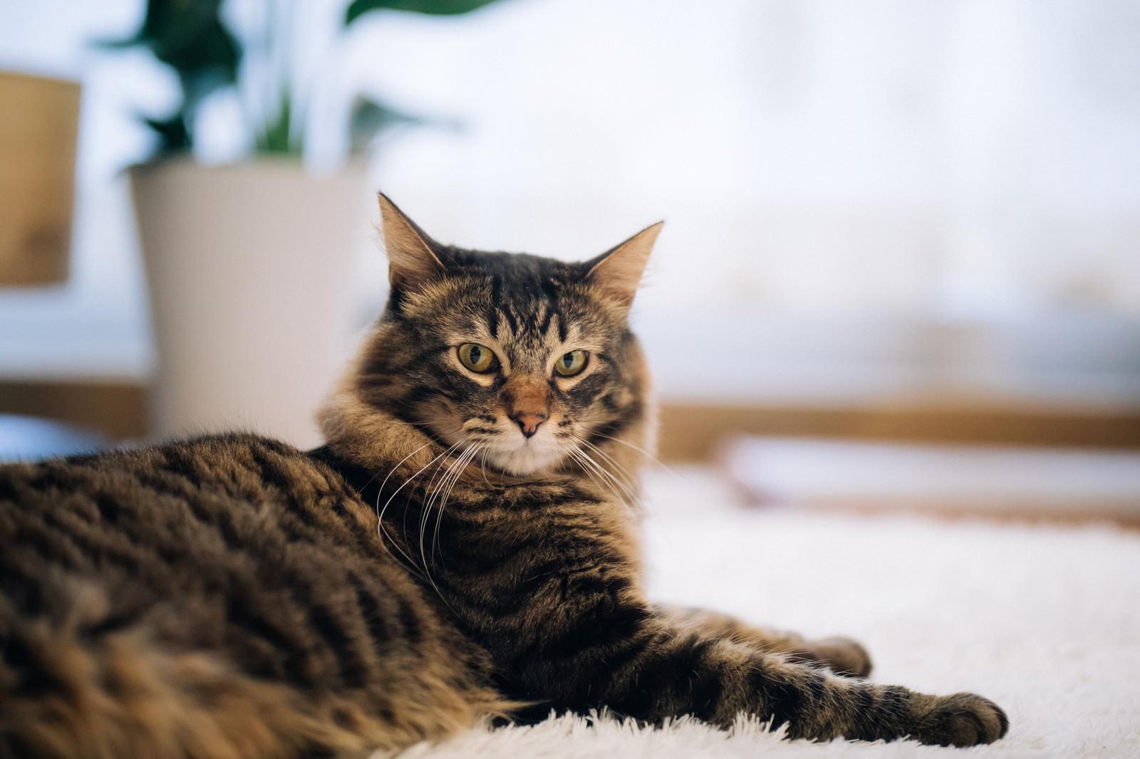 「飼い主の気配を感じ取った猫」の写真