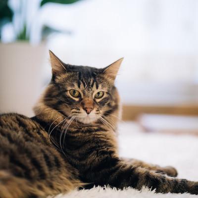 「飼い主の気配を感じ取った猫」の写真素材