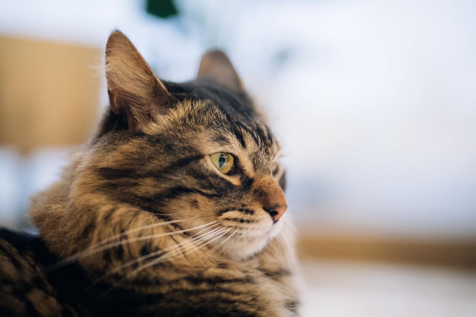 「カッパー色の猫の目」の写真