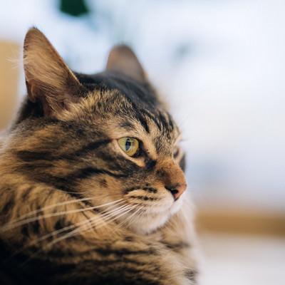 「カッパー色の猫の目」の写真素材