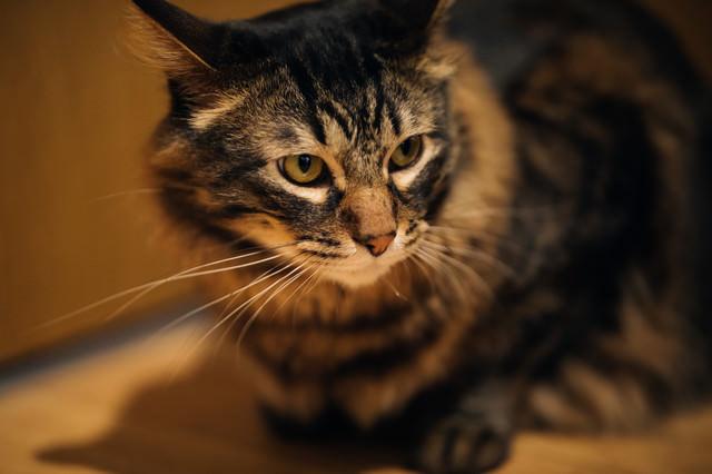 おあずけ猫の写真