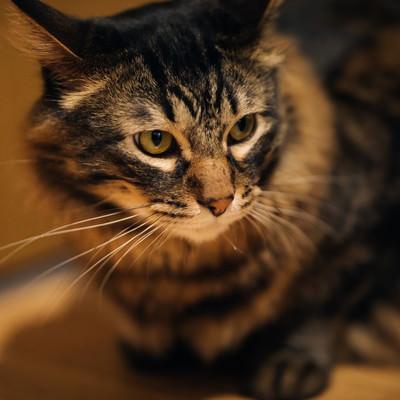 「おあずけ猫」の写真素材