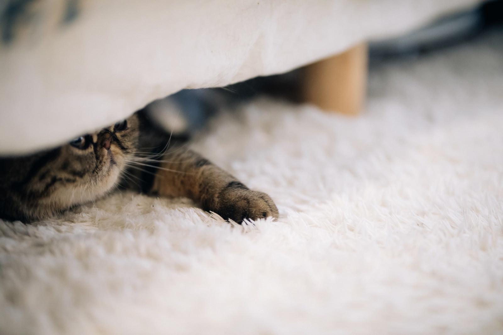 「ベッドの下の猫ベッドの下の猫」のフリー写真素材を拡大