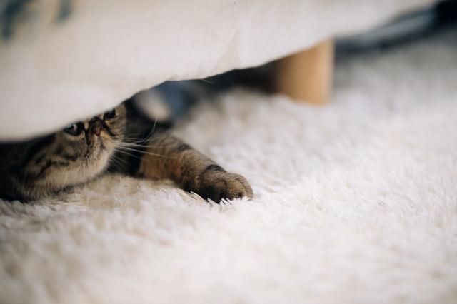 ベッドの下の猫の写真
