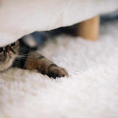 「ベッドの下の猫」の写真素材
