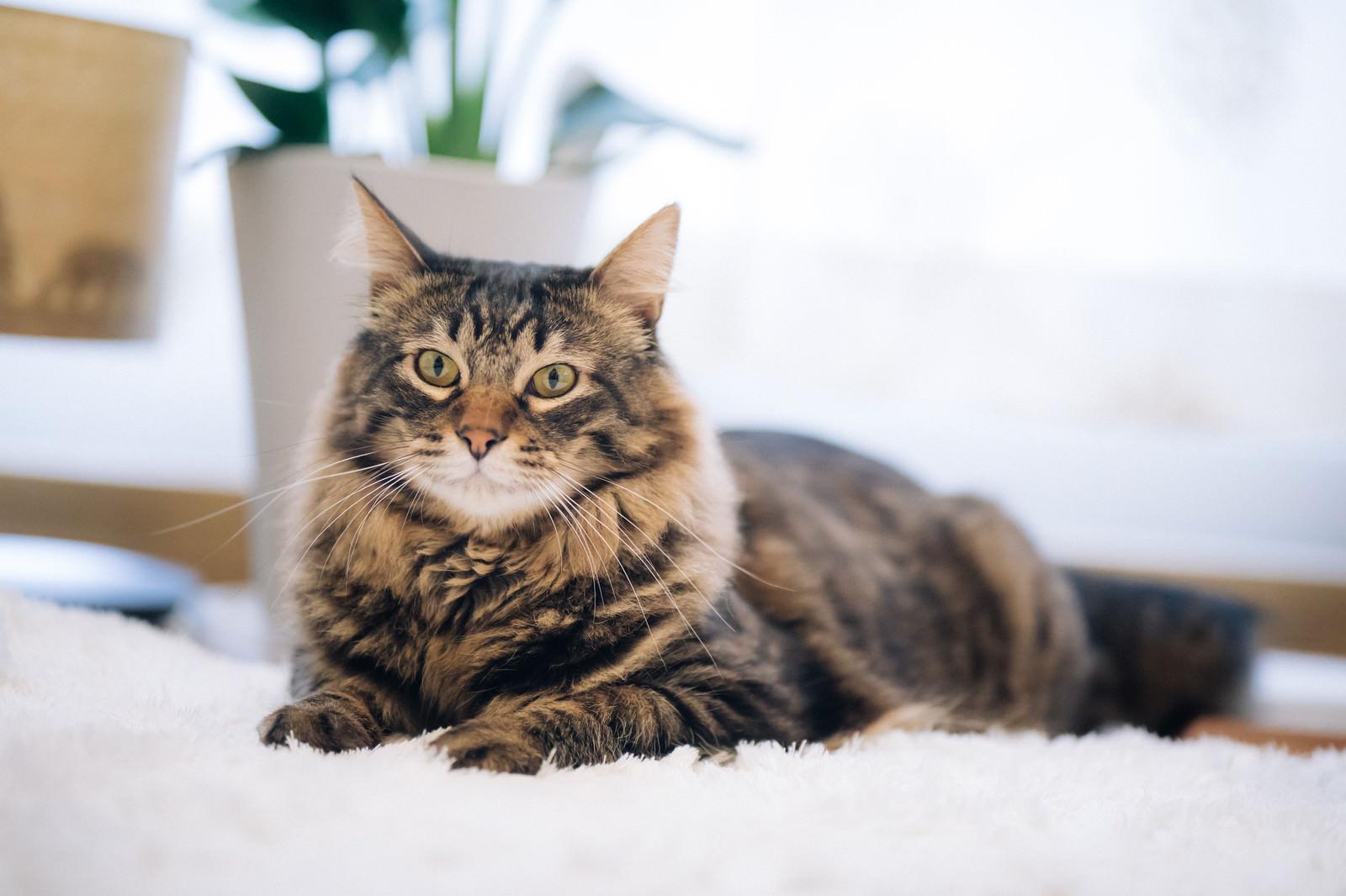 「大人の余裕さえ感じ取れる猫」の写真