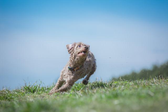 ダッシュする犬の写真