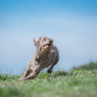 「ダッシュする犬」の写真素材