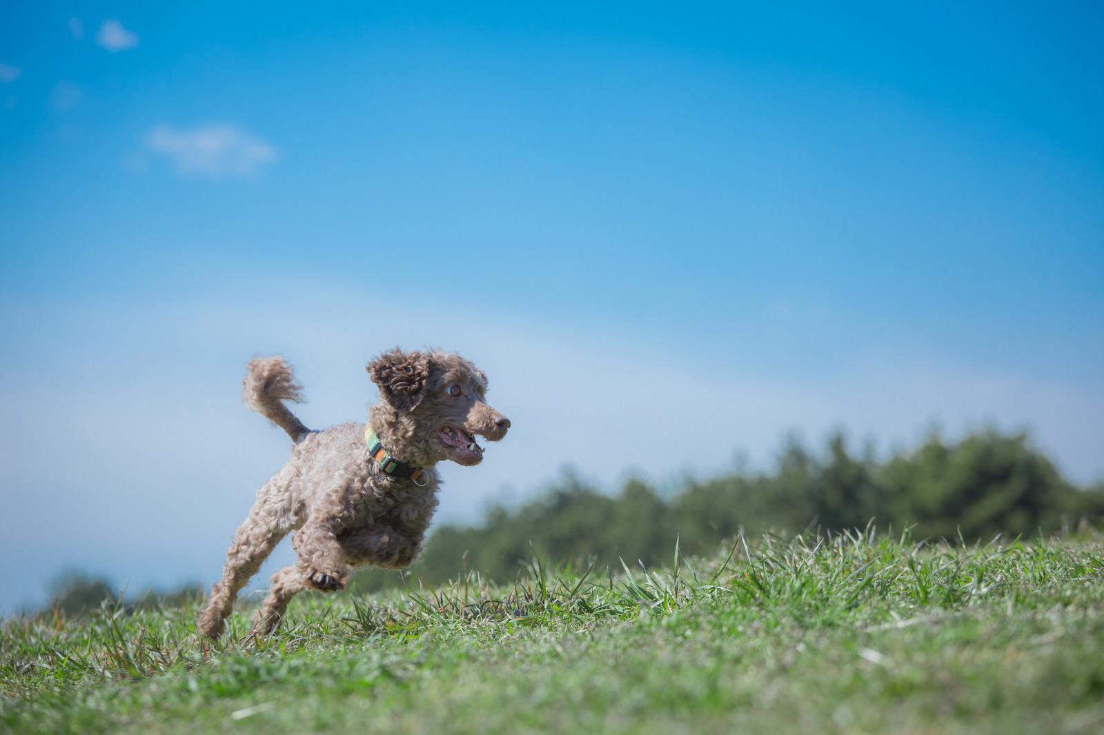 「広い公園を縦横無尽に走るわんちゃん」の写真