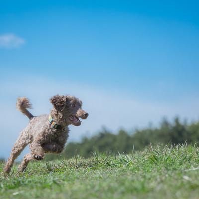 「広い公園を縦横無尽に走るわんちゃん」の写真素材