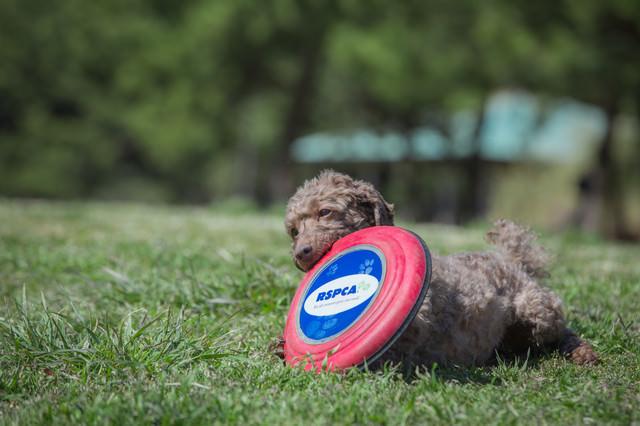 フリスビーを咥えた犬の写真