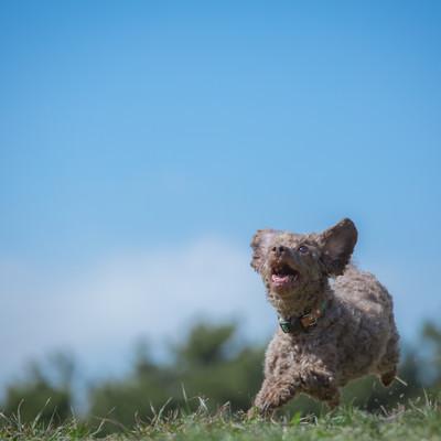 「草原を駆け巡るわんこ」の写真素材