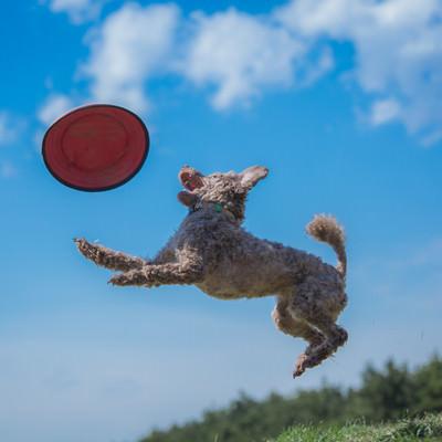 「犬と一緒にフリスビーで遊ぶ」の写真素材