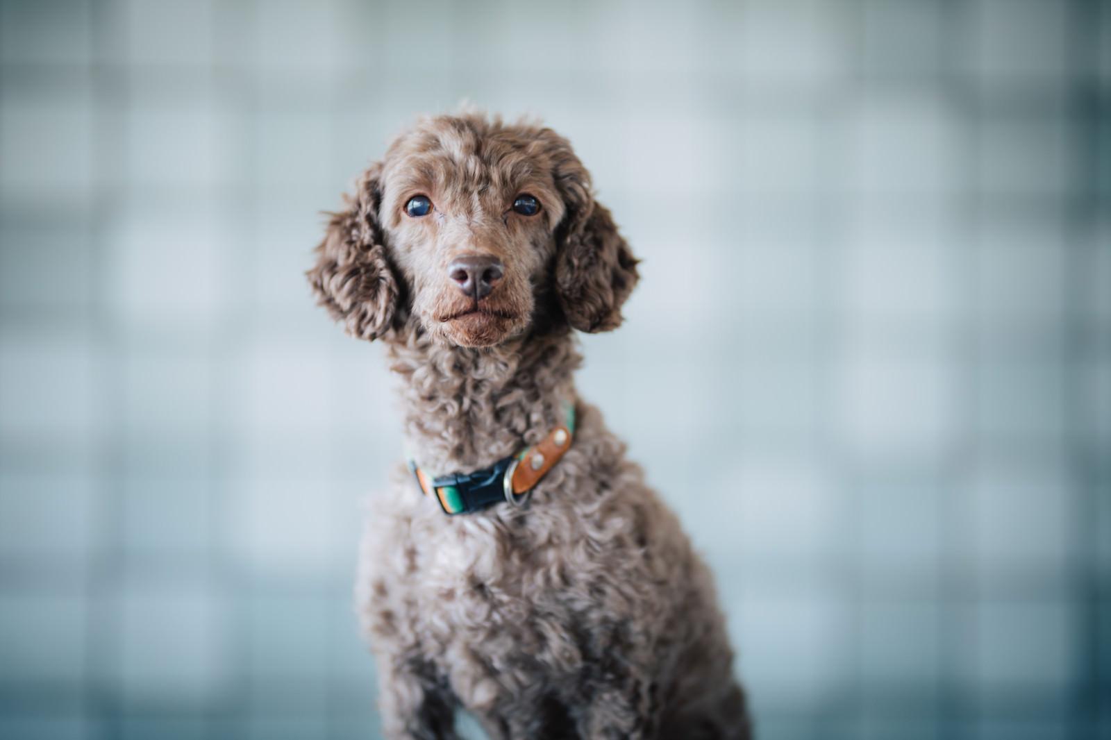 「飼い主の帰りを待つわんこ飼い主の帰りを待つわんこ」のフリー写真素材を拡大