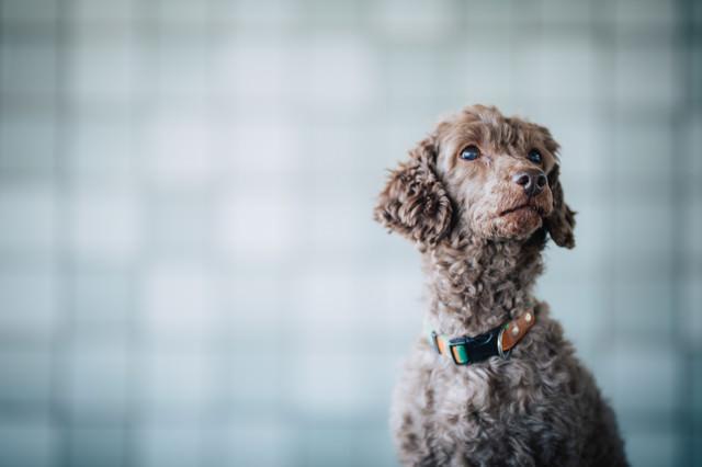 不安そうな表情で辺を見回す犬の写真