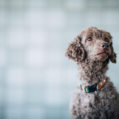 「不安そうな表情で辺を見回す犬」の写真素材