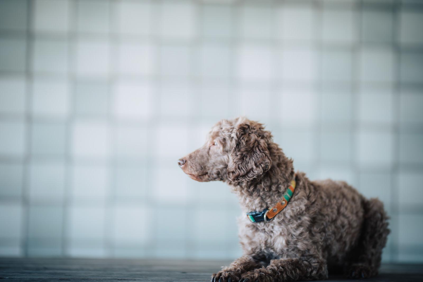 「難事件にぶち当たった犬探偵の朝」の写真