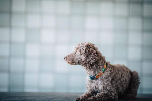 難事件にぶち当たった犬探偵の朝の写真