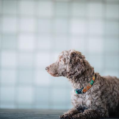 「難事件にぶち当たった犬探偵の朝」の写真素材