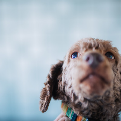 上を見上げる犬の写真