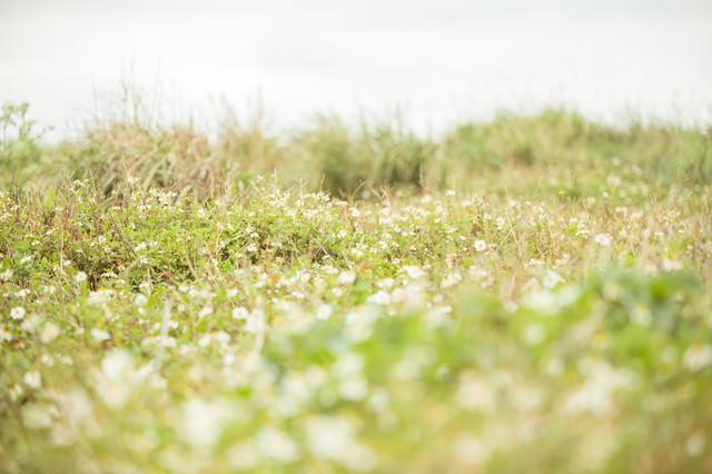 道端の野草の写真