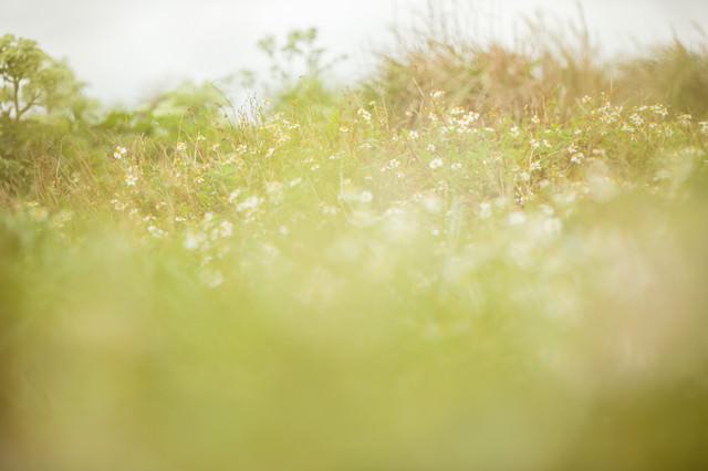 やわらかな光と野草の写真