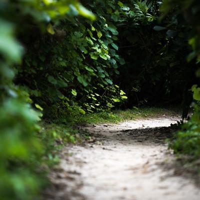 緑に覆われた道の写真
