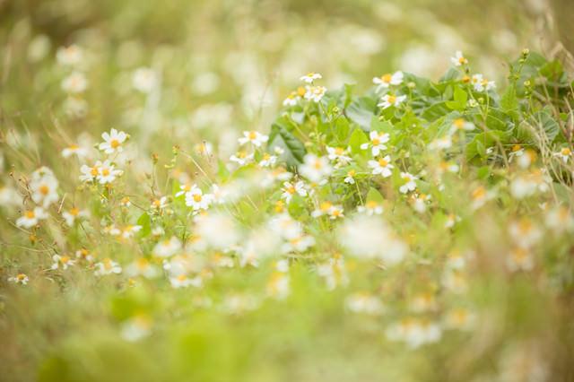 春らしい野花の写真