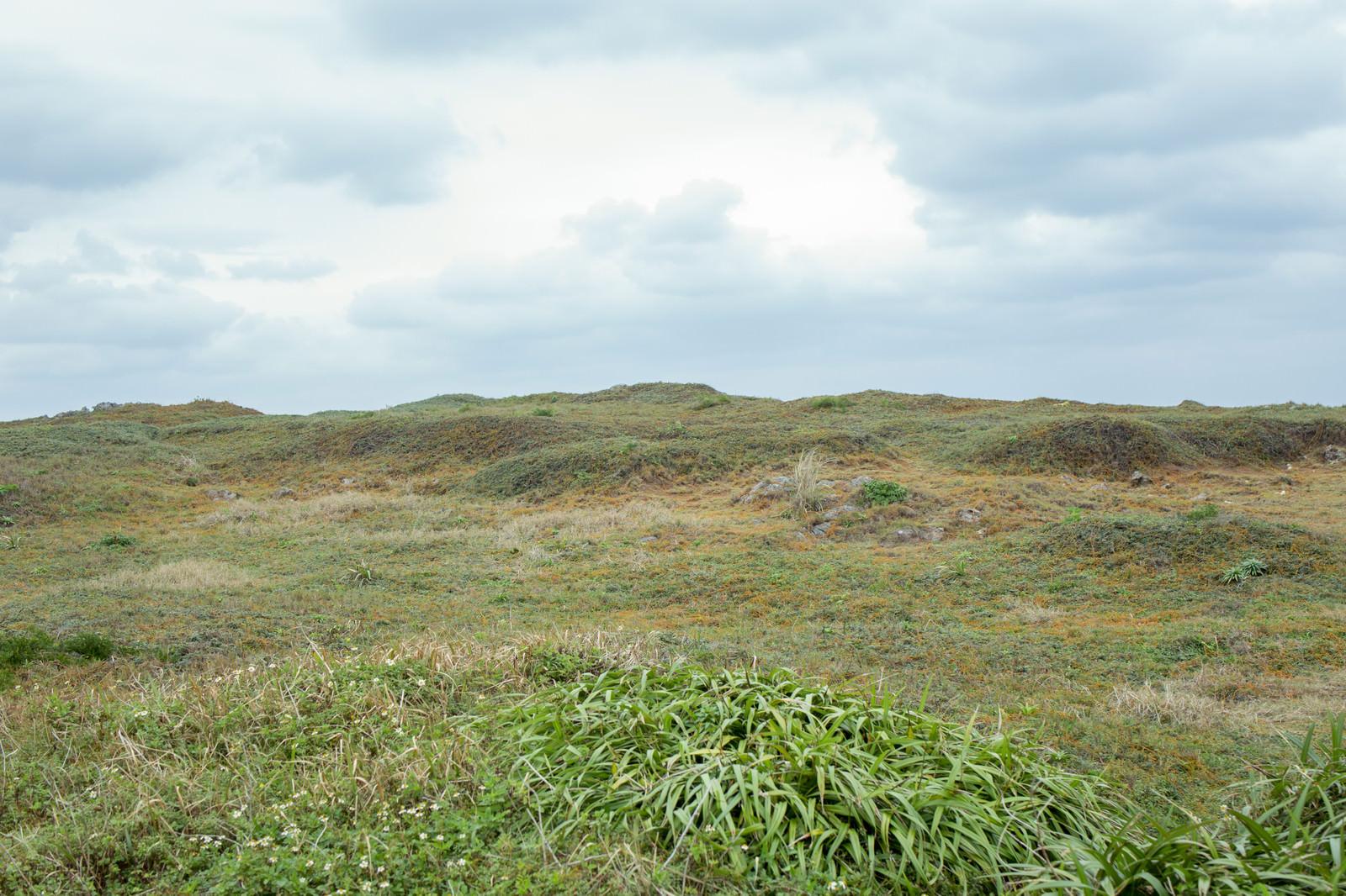 「生い茂る丘」の写真
