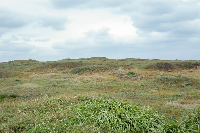 生い茂る丘の写真