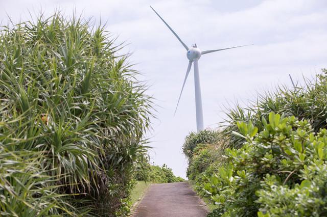 宮古島の風力発電に続く道の写真