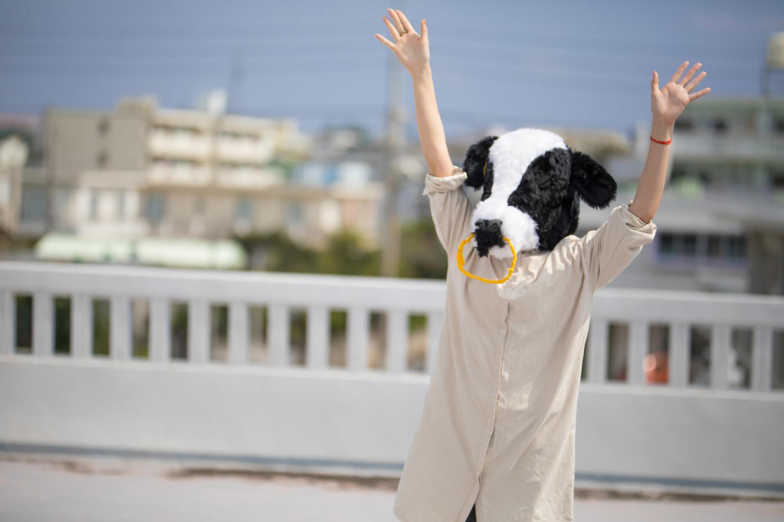 「不審者扱いされ両手を挙げる牛ガール」の写真[モデル:古性のっち]