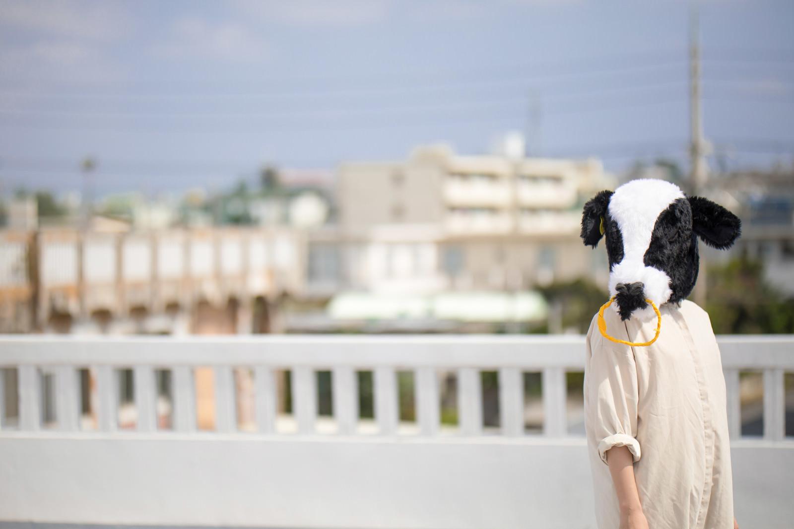「哀愁漂う牛人間」の写真[モデル:古性のっち]