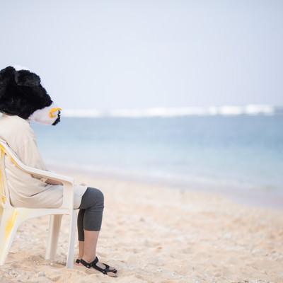 宮古島の美しい海を見て失恋の傷を癒やす牛ガールの写真