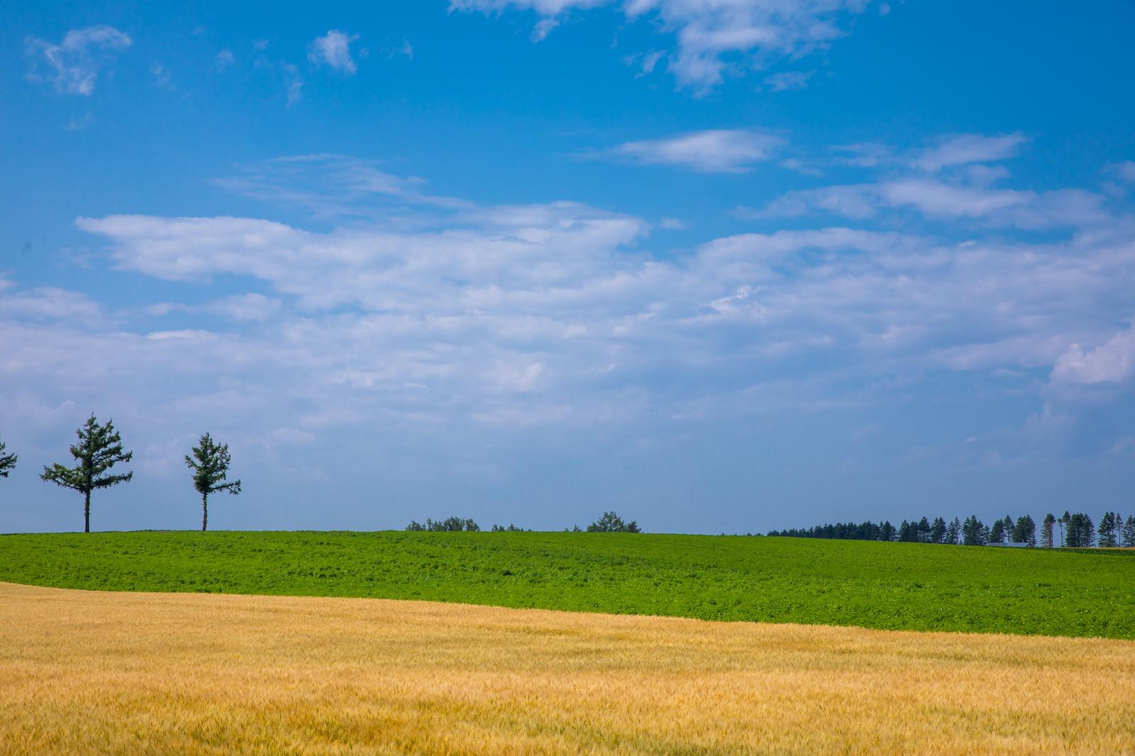 「青空と草原と小麦畑」の写真