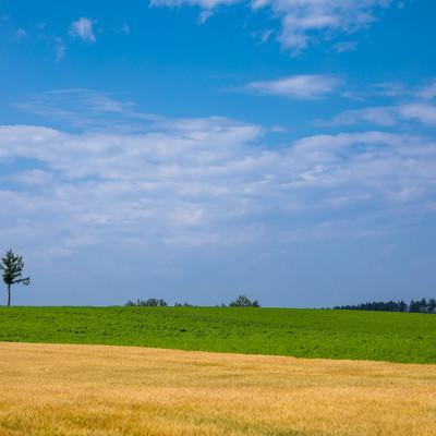 青空と草原と小麦畑の写真