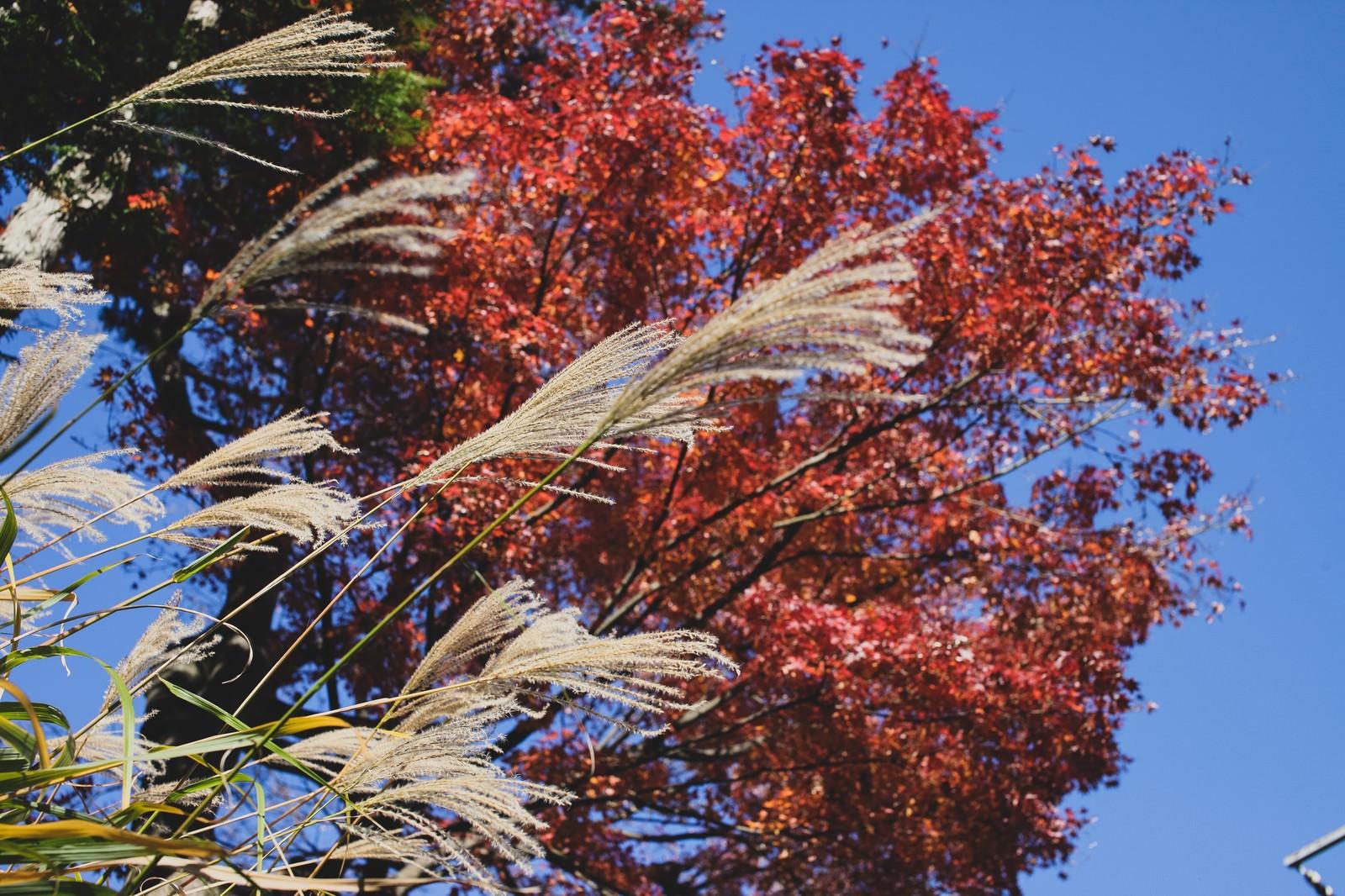 「秋真っ盛りの彩り」の写真