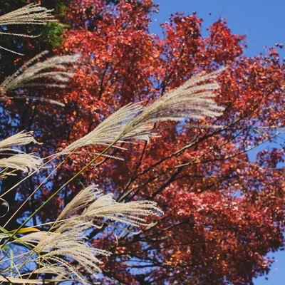秋真っ盛りの彩りの写真
