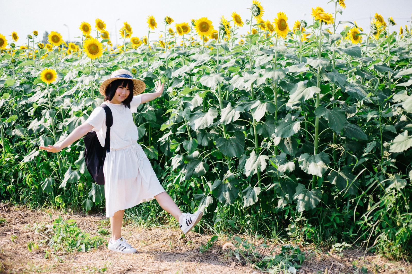 「ひまわり畑ではしゃぐ彼女」の写真[モデル:にゃるる]