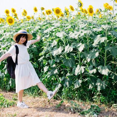 「ひまわり畑ではしゃぐ彼女」の写真素材