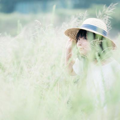「かくれんぼ」の写真素材