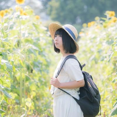 「ひまわり畑となつやすみ」の写真素材