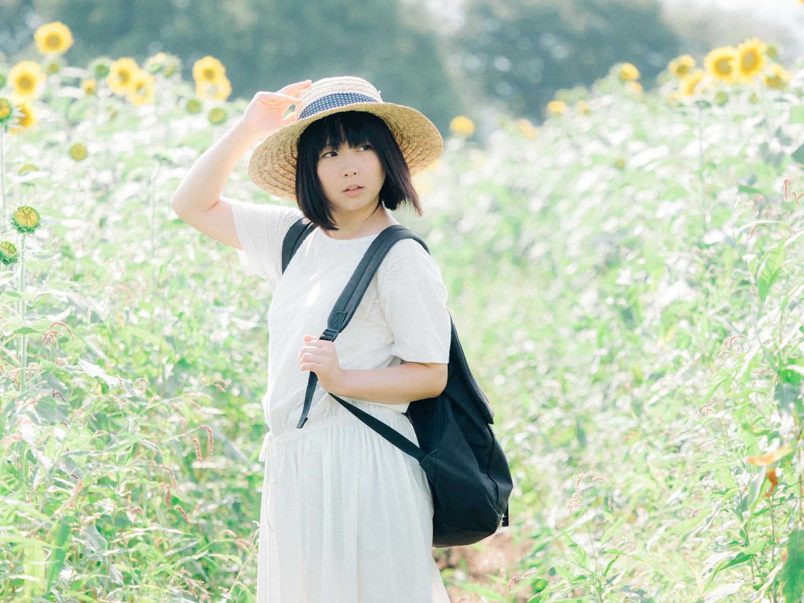 「ひまわりと夏の思い出」の写真[モデル:にゃるる]